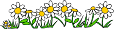 clip art of white daisy flowers